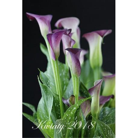 Kalendarz 2018 Kwiaty (7plansz)