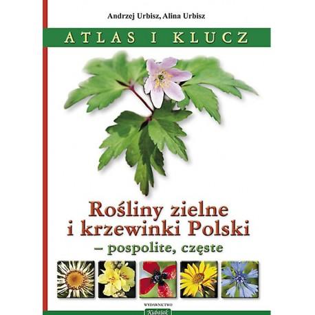 Rośliny zielne i krzewinki Polski