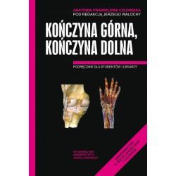 Kończyna górna kończyna dolna Anatomia prawidłowa człowieka