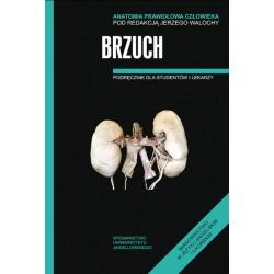 Brzuch Anatomia prawidłowa człowieka