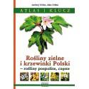Rośliny zielne i krzewinki Polski Atlas i klucz